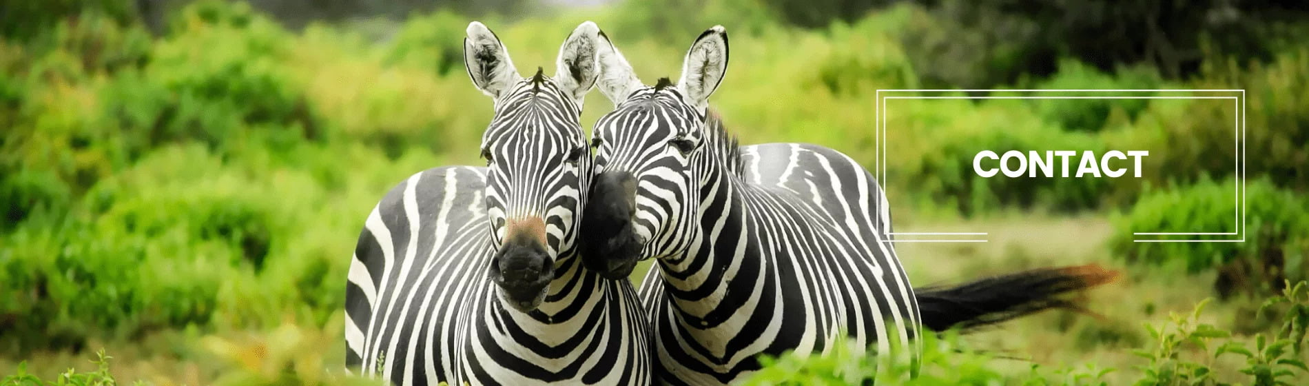 behavioural ecology group contact zebras